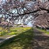 春爛漫・・どこまで続く桜並木・・満開だぁ