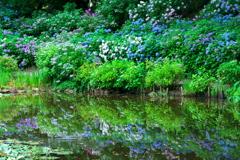 水辺の風景 2020初夏 II