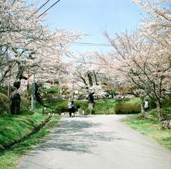霞ヶ城 春景 ②