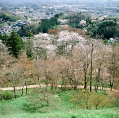 霞ヶ城 春景 ①