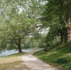 新緑の酒蓋公園1