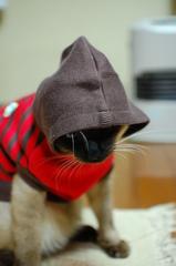 パーカーを着る猫