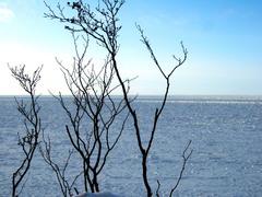 寒いな木と海