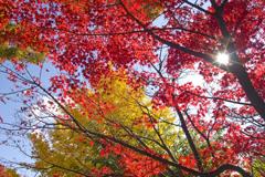 秋なんですけど・・・