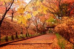 まるで京都