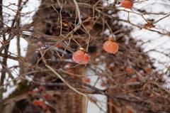 世界遺産の柿?