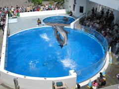 イルカのボールキャッチ