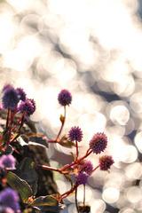 Flow of light balls @ autumn