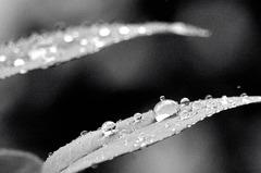 Rain drop in !!