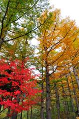 上高地 色鮮やかな森