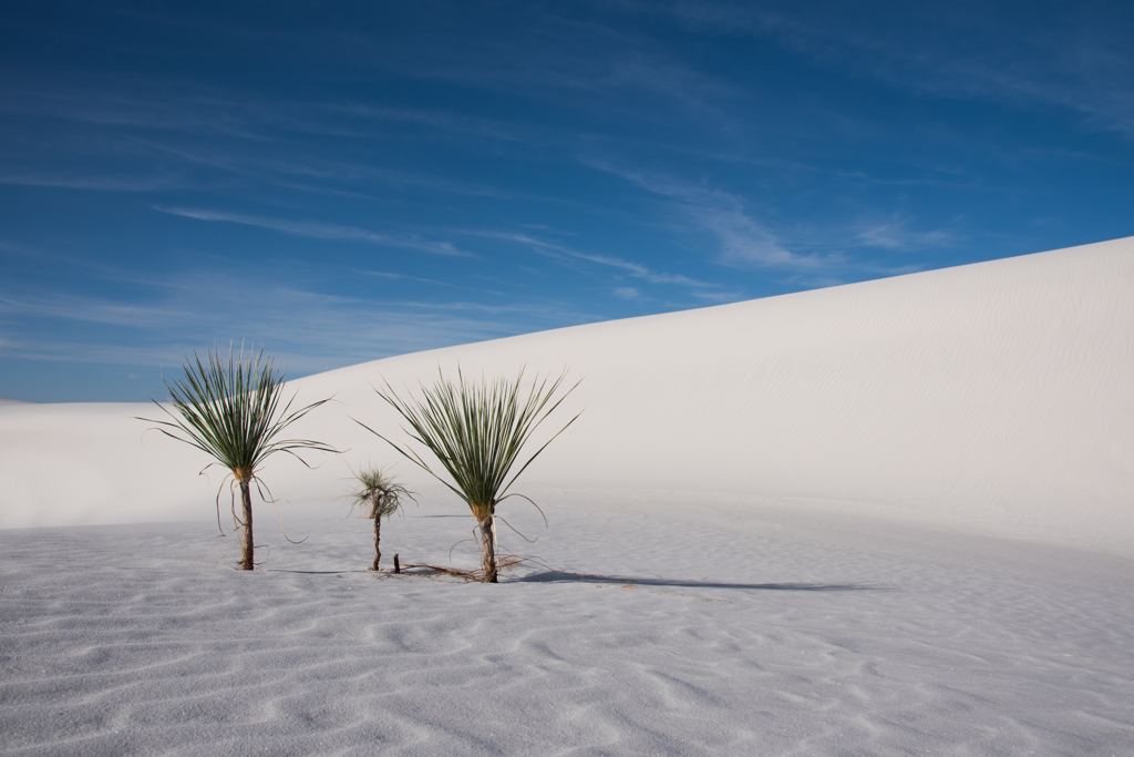 Yucca's family