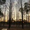 鶴見緑地での夕景