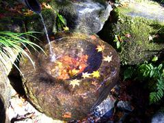 水と紅葉のコラボ