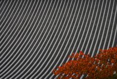 寺町通りの秋