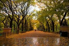 秋雨に濡れた道