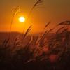 Sunny Yellow!!!!!