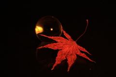 紅葉(色違いver.)