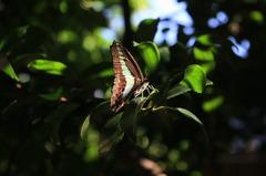 なんて蝶?