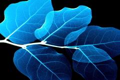 電脳-leaf。