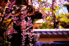 和・美・桜。