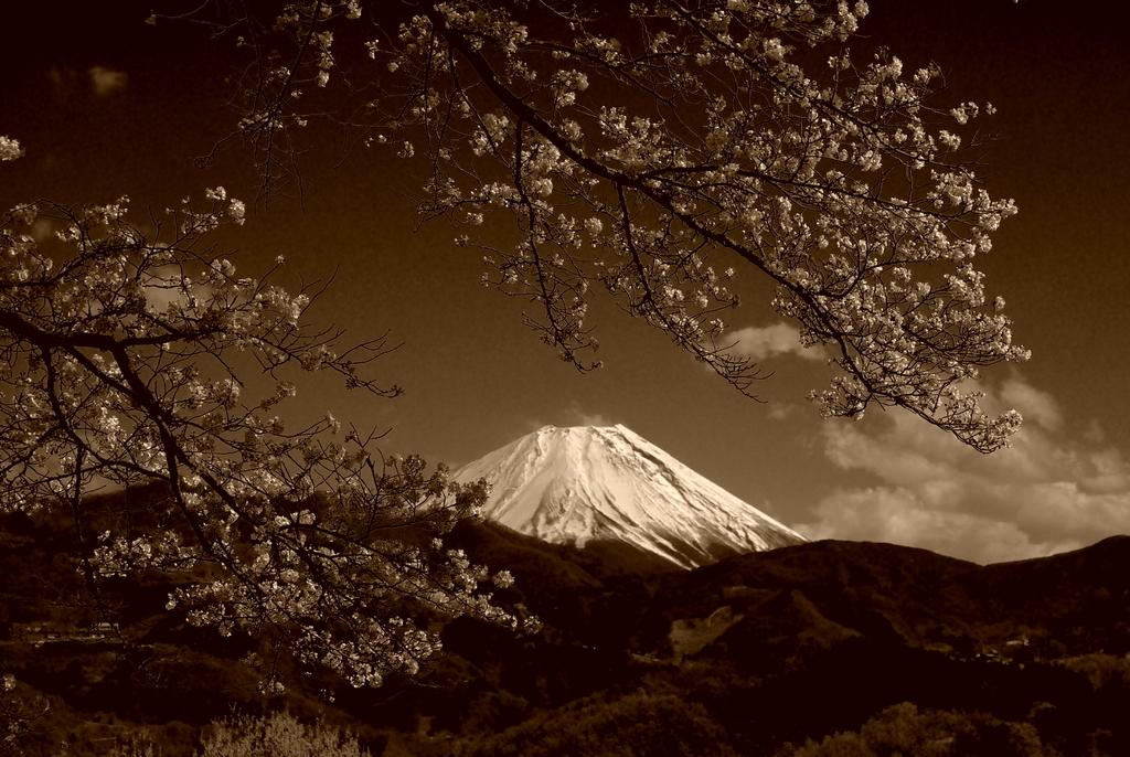 桜・JAPAN。