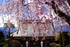 和・美・桜(part2)