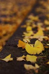 秋の破片。
