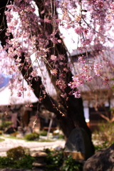 和・美・桜(part3)