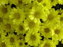 黄とひかり