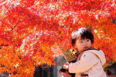 赤い葉っぱなんかよりも僕の興味は・・・