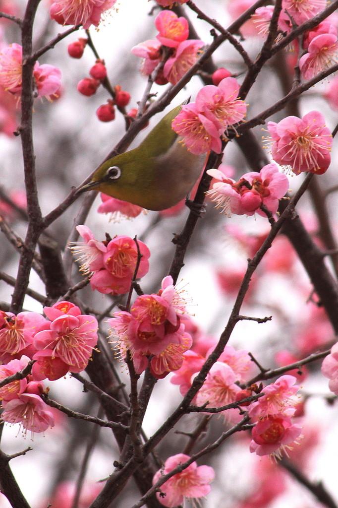 そろそろ春ですね