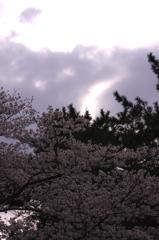 春なのに・・・