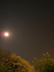 月 菜花 桜