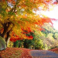 秋真っ只中のゴルフ場