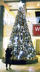 My tree...!