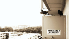 Sky-master