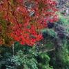 紅葉(養老渓谷)