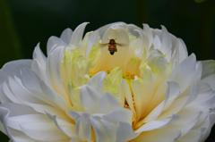 蓮の花咲く頃 3