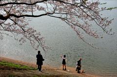 それぞれの桜