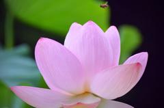 蓮の花咲くころ 3