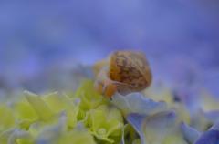 紫陽花の咲く頃 2