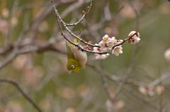梅の花咲く頃 3
