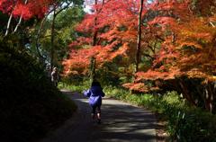 晩秋の小道