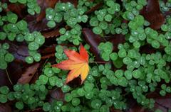 クローバの上の小さな秋