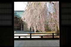 高台寺桜窓