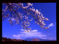 つくばの春