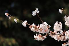 春本番 2