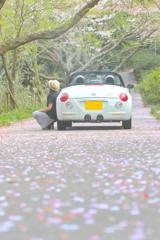 桜の絨毯道