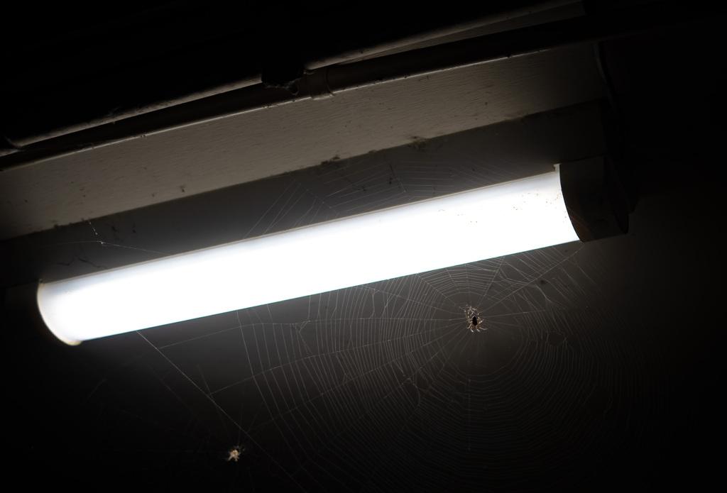 電灯と蜘蛛の巣