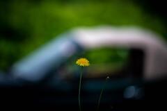 花とクルマ